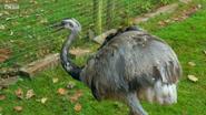 The Zoo Rhea