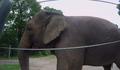 Bronyx Zoo TV Series Elephant