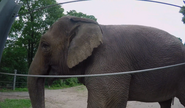 Bronyx Zoo TV Series Elephant