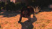 Cabela's lion 3