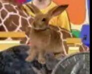 Cookoo Concertos Rabbit