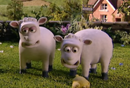 Creature Comforts Sheep