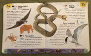 Extreme Animals Dictionary (22)