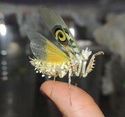 Flower Mantis.jpg