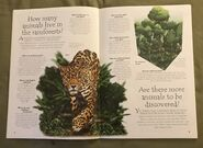 Jungle Animals (Over 100 Questions and Answers to Things You Want to Know) (1)