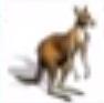 Kangaroo-rct3
