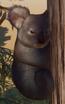 Koala, Queensland (Planet Zoo)
