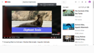 Marine Mammals Elephantseal