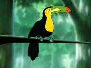Rileys Adventures Keel-Billed Toucan