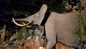Rolling Hills Zoo Elephant