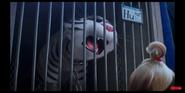 SLOP Tiger