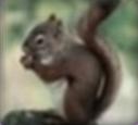 Squirrel-disneythinkfast