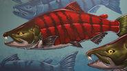 20120922sabertooth salmon-1