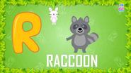 Baby Time Raccoon