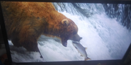 Born To Move Bear