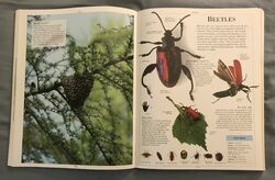 DK Encyclopedia Of Animals (46).jpeg