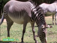 Elmo's World Zebras