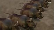 Gon Rhinoceros