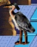 Heron reader rabbit 1st grade
