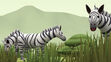 Leo the Wildlife Ranger Zebras