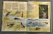 Macmillan Animal Encyclopedia for Children (34)