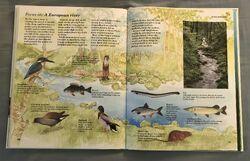 Macmillan Animal Encyclopedia for Children (34).jpeg