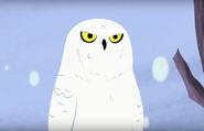 Snowy Owl (Wild Kratts)