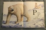 The A to Z Book of Wild Animals (15)