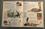 The Kingfisher First Animal Encyclopedia (16)