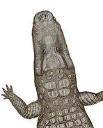 250px-Crocodylus thorbjarnarsoni