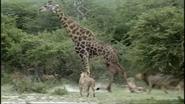 AFO Giraffe
