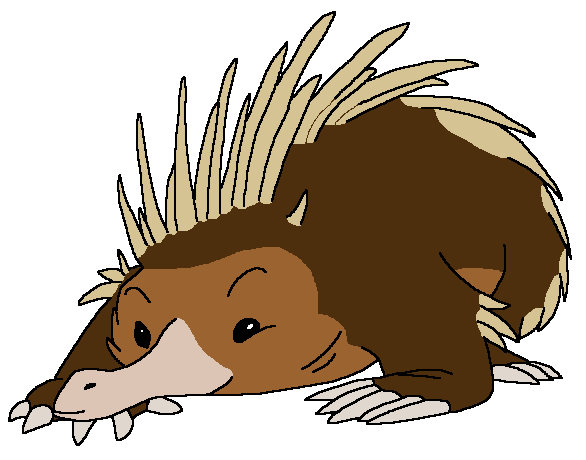 Abel the Short-Beaked Echidna