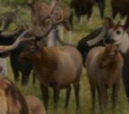 Evan Almighty Elks
