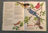 I Wonder How Parrots Can Talk (8)