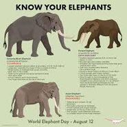 Know the Elephants