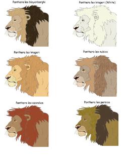 Lion subspecies.png