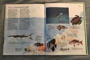 Macmillan Animal Encyclopedia for Children (44)