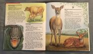 My First Book of Animals from A to Z (5)