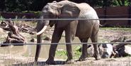 Omaha Zoo Elephant