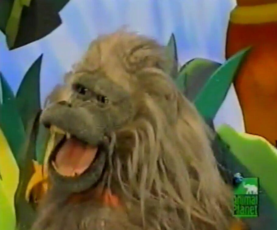 Alana the Baboon