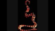 Safari Island Boa Constrictor