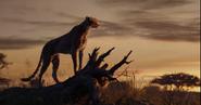 TLK 2019 Cheetah