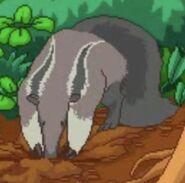 BTKB Anteater