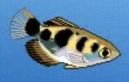 BTKB Archerfish