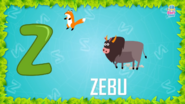 Baby Time Zebu
