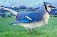 Blue jay switch zoo