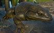 Frog, Goliath (Planet Zoo)