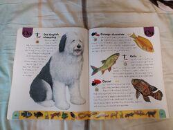 Pet Dictionary (17).jpeg