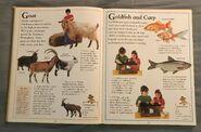 The Kingfisher First Animal Encyclopedia (31)