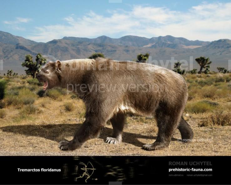 Florida Spectacled Bear